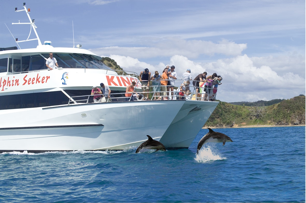 Dolphin Safari Catamaran Whale Dolphin Safari