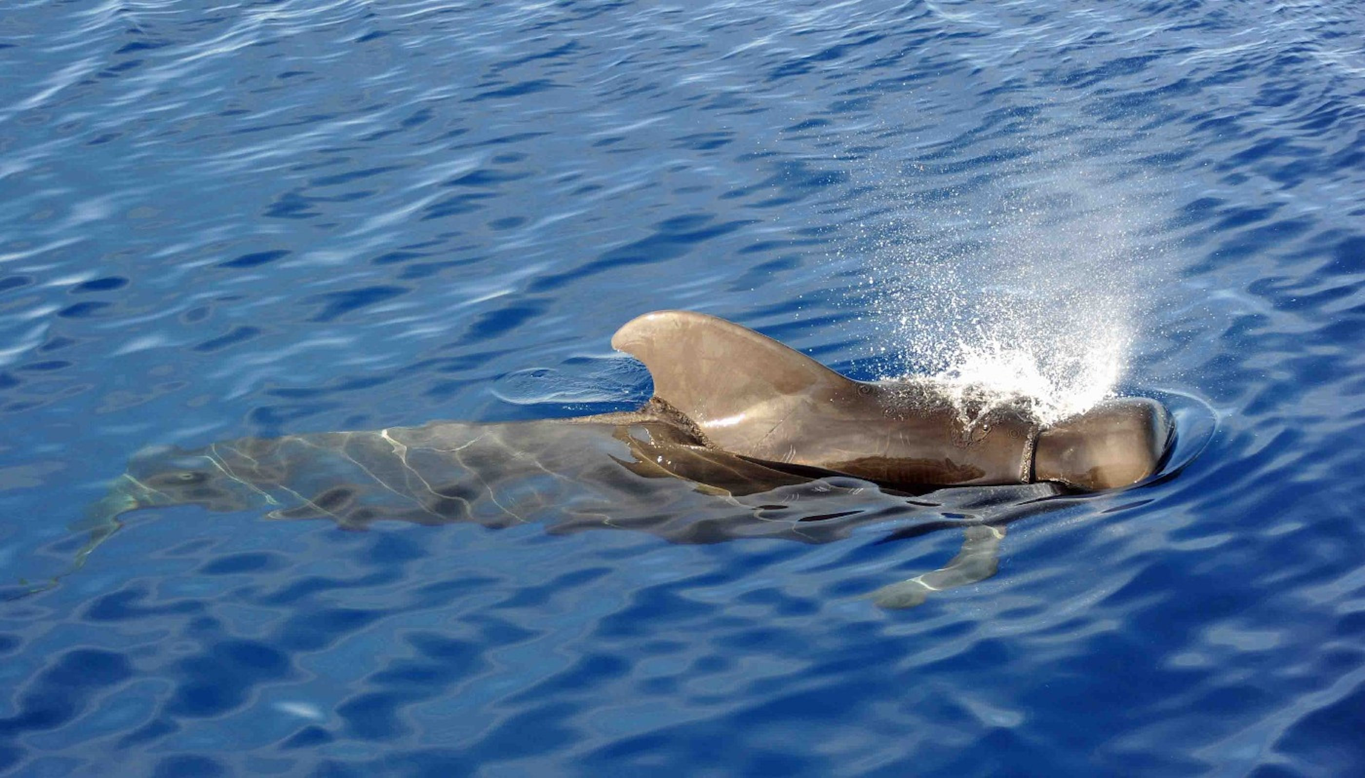 dolphin watching trip in male triip